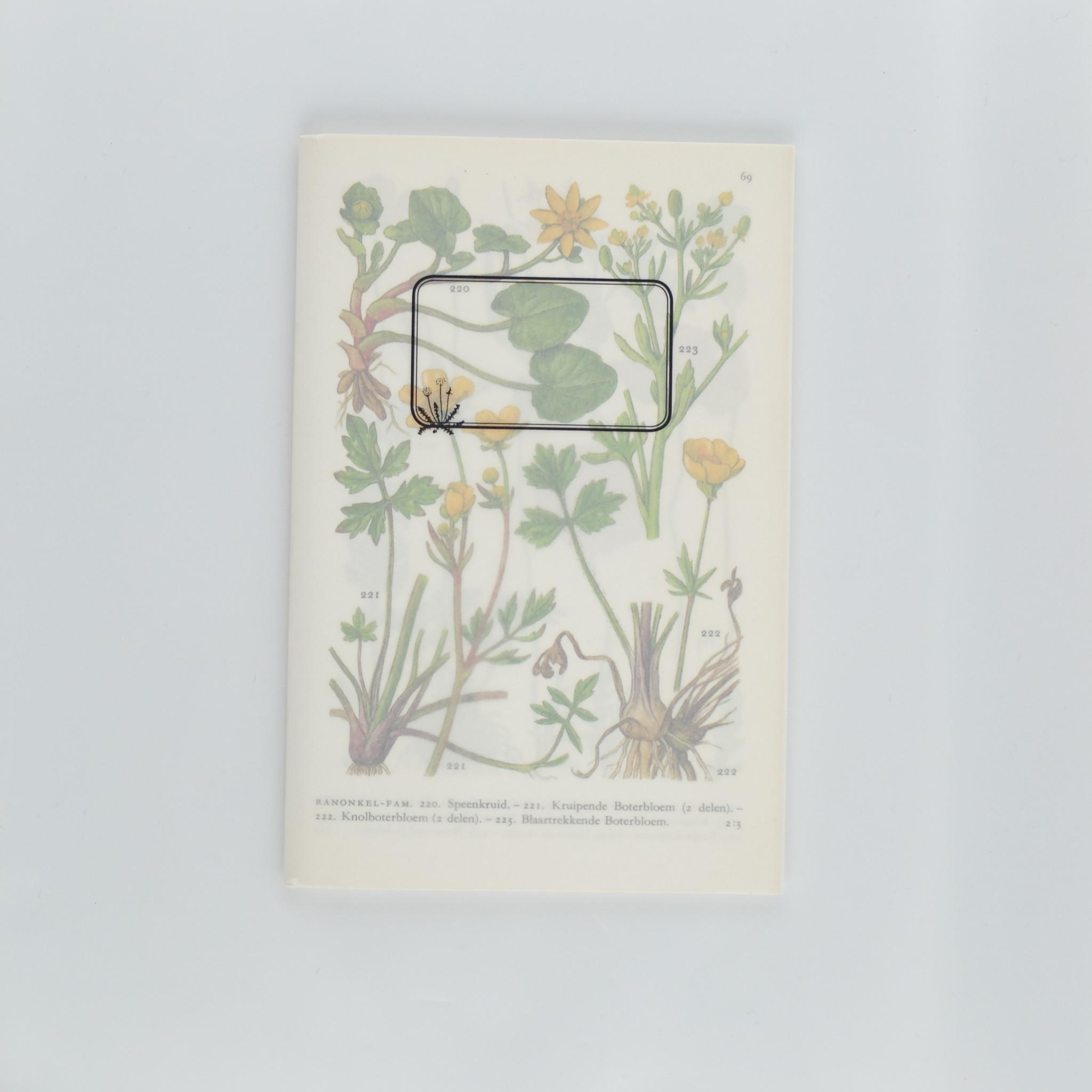 Plantenschriftje met zaden